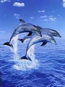 Dolphin Wall Murals door murals waterfall scenic door murals dolphin door mural