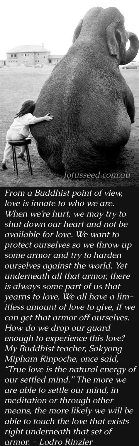 zen quote about colors best 20 buddha quotes ideas on