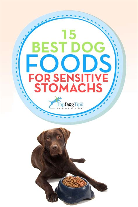 best puppy food for sensitive stomach top 15 best sensitive stomach foods for upset stomachs 2017