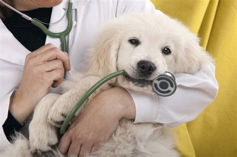 puppy insurance plans what your insurance plan covers and what s left out