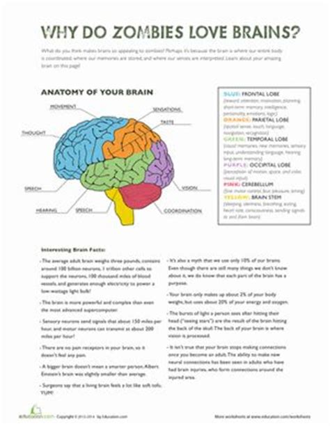 Parts Of The Brain Worksheet by Parts Of The Brain The Brain Worksheets And
