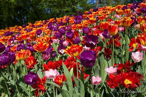 i giardini di marzo i giardini di marzo si riempiono di nuovi colori juzaphoto