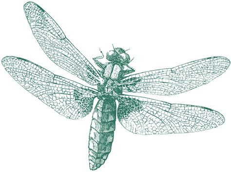 free clipart graphics royalty free images dragonfly the graphics