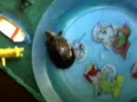 maquetas de tortugas con botella exposicion con maqueta mostrando tortugas youtube