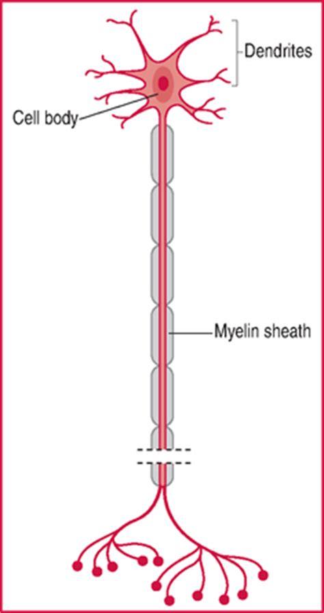 motor neuron definition motor neurone motoneurone definition of motor neurone