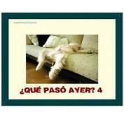 Jpeg 44kB Imagenes Chistosas Para El Facebook Dos Perros Car Tuning