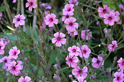 8 plants to get rid of mosquitoes at home rl