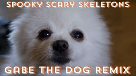 Very Fresh And Spooky Memes - 12 best images about gabe the dog on pinterest your life
