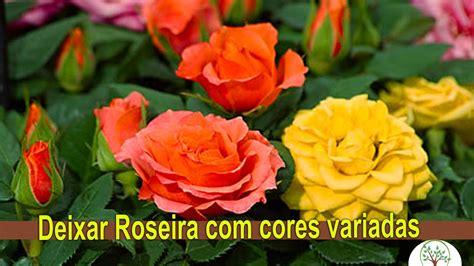 imagenes rosas varias roseira com varias cores enxertia em rosas com o amigo