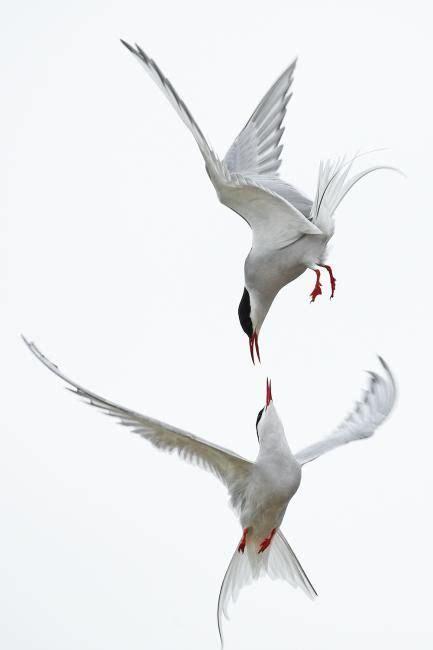 V Gel In Unserem Garten 3898 by Die 25 Besten V 246 Gel Ideen Auf Vogel