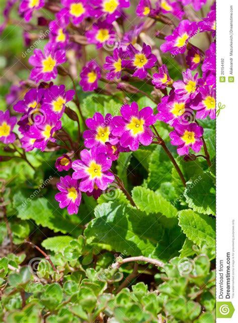 small beautiful pics small beautiful pink flowers stock photography image