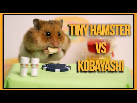 tiny hamster eats tiny hot dogs faster than any human can