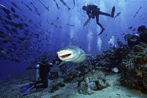 scuba diving in fiji islands dive the world vacations