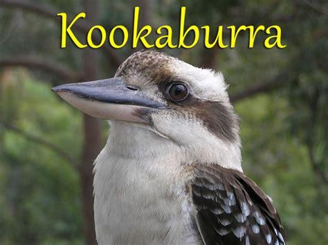 row row row your boat karaoke mp3 free nursery rhymes gt kookaburra free mp3 audio download