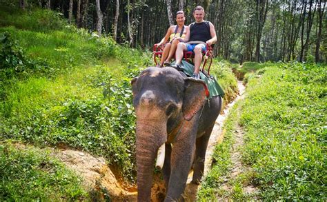 Elephant Safari and Bamboo Rafting One Day Tour Chiang Mai