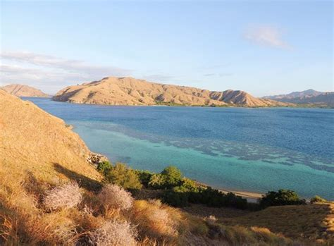 pengah reef komodo national park