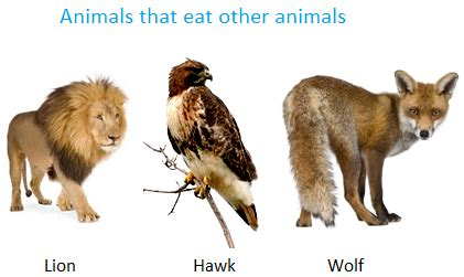 only eats from food for animals different animals eat different kinds