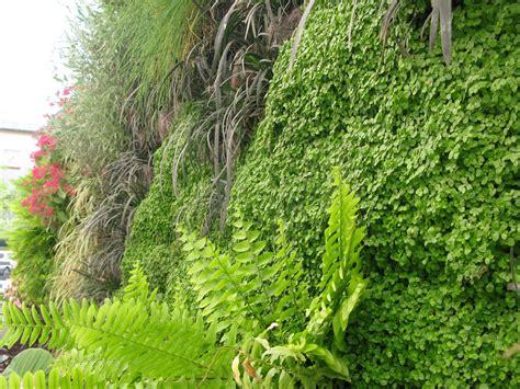 Vertical Garden galer 237 a de en detalle jard 237 n vertical en cl 237 nica usp