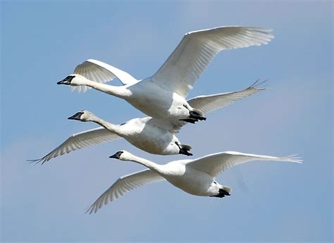 applaud commitment to saving the lives of migrating birds