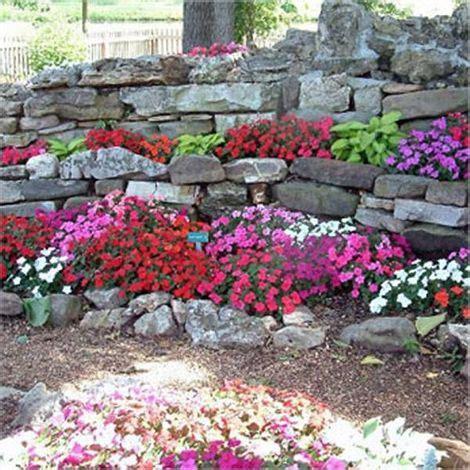 sementi fiori perenni semi di fiori per giardini rocciosi