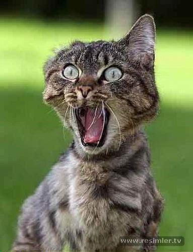 kedi resimleri komik kedi