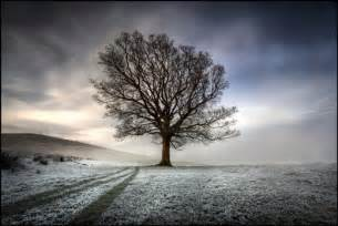 50 beautiful examples of tree photography noupe