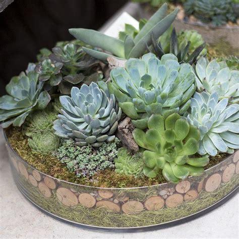 succulents in spain 68 best succulent gardens images on succulents garden outdoor gardens and backyard