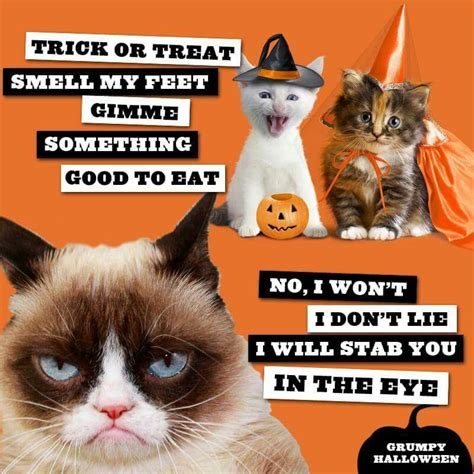 Omg Cat Meme - it was a grumpy cat halloween and like omg get some