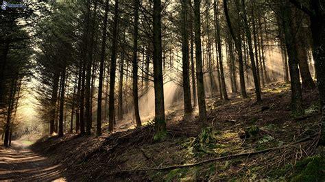 imagenes de bosques otoñales bosques de con 237 feras
