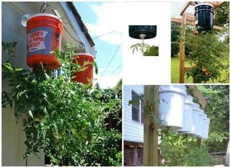 Tomato Planters Ideas by Grow Tomatoes Diy Planter Www Fabartdiy