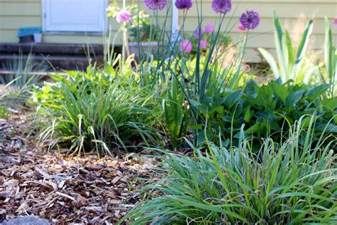 wood chip backyard using wood chips in the garden hip chick digs