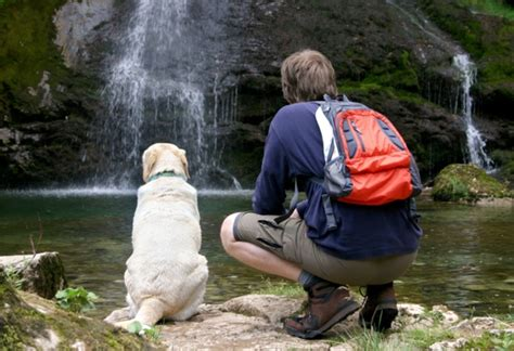 hiking trails  dogs petmd
