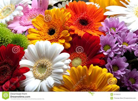 colorful flowers blossom stock photo image of colors 31135212