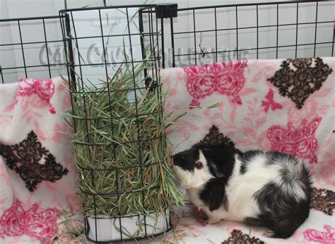 How To Make A Hay Rack For Guinea Pigs by Undercover Guinea Pigs Hay Solutions Vertical Hay Rack