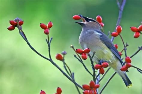 How To Start A Flower Garden In Your Backyard 7 Ways To Make Your Yard Bird Friendly The Soothing Blog