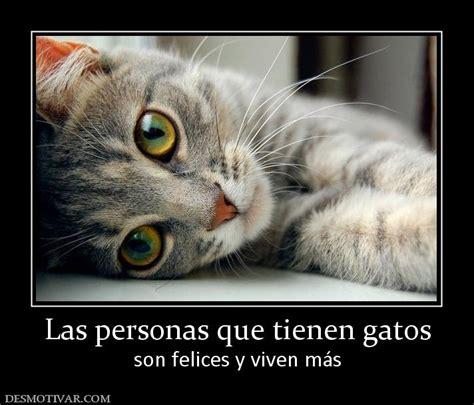 imagenes de gatos tristes con mensajes imagenes tiernas especial gatitos taringa