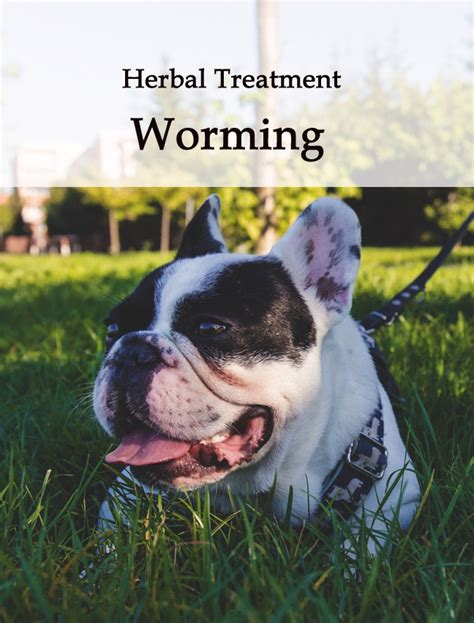how to deworm a puppy naturally herbal worming tonic for dogs caraf avnayt s herbal treatments