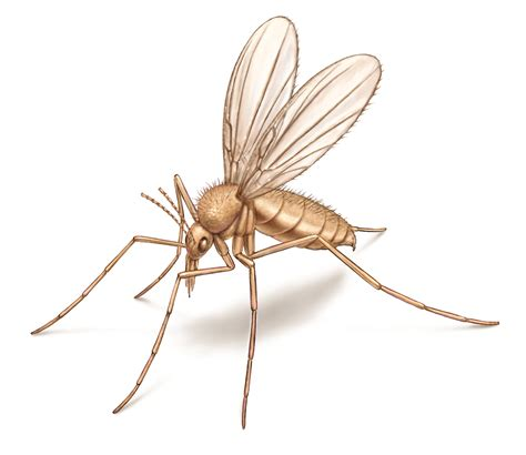 sand fliese sand flies