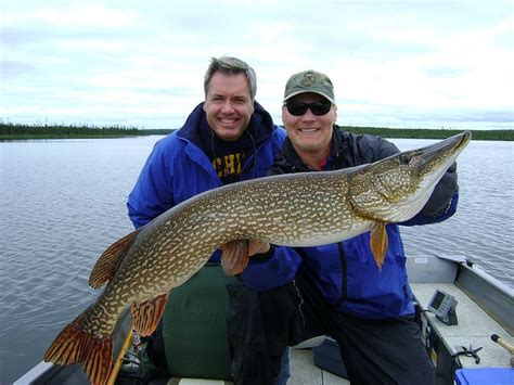 Fishing 32 Fish 32 best images about fishing in saskatchewan on