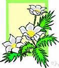 anemone dictionary flower anemone definition of flower anemone by the free