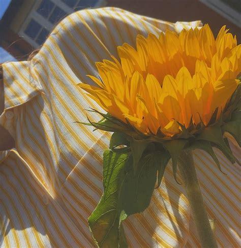 beautiful sunflower photography aesthetic yellow