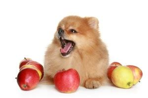 can dogs eat plums can dogs eat fruit petfoodia