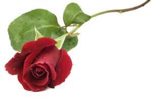Personalized Flower Vase Roses