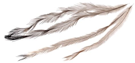 feather tattoo png red hawk feather drawing png pictures to pin on pinterest