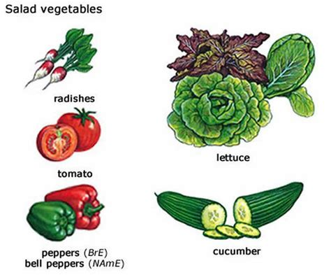vegetables used in food salad vegetables learning about salad vegetables