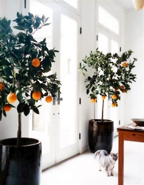 cool small palnts to grow 10 awesome gardens for really small spaces gardening viral