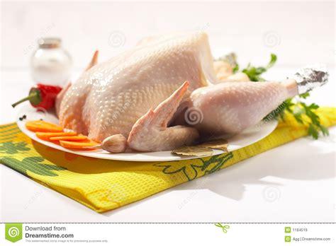 imagenes libres pollo pollo fresco