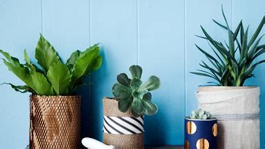 the best indoor plants for small spaces tiny living the best indoor plants for small spaces homes