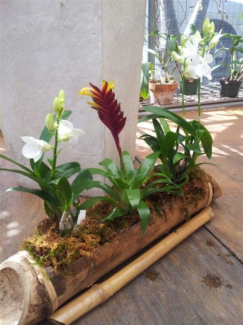 in door plants pot three four plants argements 23 best images about orchid arrangement on manzanita branches snake plant and planters