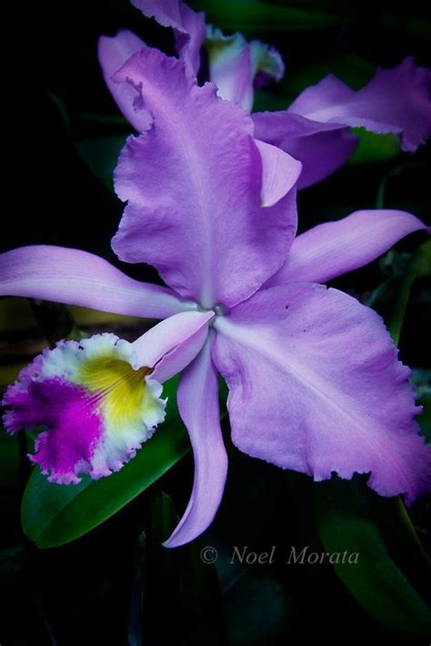 You Ve Garden Flower Bra Purple 17 best images about orkide on purple orchids